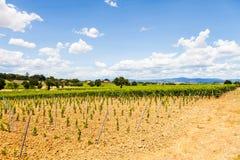 Tuscany Wineyard stock photos