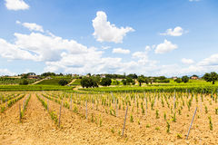 Tuscany Wineyard Royalty Free Stock Photos