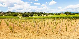 Tuscany Wineyard Royalty Free Stock Photography