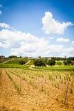 Tuscany Wineyard Royalty Free Stock Photos