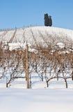 Tuscany: wineyard in winter Royalty Free Stock Image