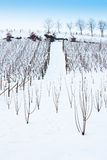Tuscany: wineyard in winter Stock Photo
