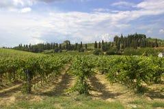 tuscany winnica Obrazy Stock