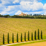 Tuscany, winnica, cyprysowi drzewa i droga, wiejski krajobraz, Ital Zdjęcia Stock