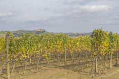 Tuscany wrażenia obrazy royalty free