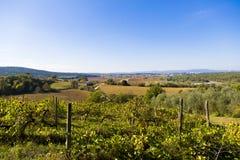 Tuscany wzgórza Obraz Stock