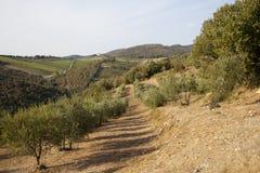 Tuscany wzgórze Zdjęcie Stock