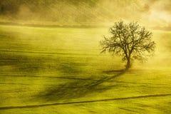 Tuscany zimy ranek, osamotniony drzewo i mgła, Włochy Fotografia Stock