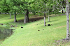 Tuscawilla公园奥卡拉,佛罗里达 图库摄影