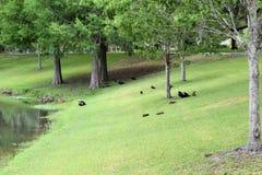 Tuscawilla parkerar Ocala, Florida Arkivbild