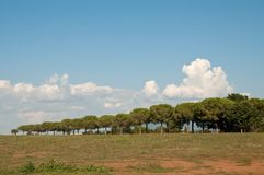 Tuscia in Viterbo Lazio countryside avenue Royalty Free Stock Photography