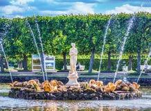 tusen dollar för 37 64 142 har den bronze kaskadspringbrunnspringbrunnar för russia för strålpeterhofpetersburg petrodvorets vatt Arkivfoto