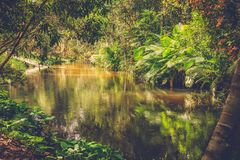 Tusen lingasflod för den cambodia för angkoren skördar banteay lotuses laken siemsreytempelet cambodia royaltyfria foton
