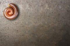 Tusenfotingen krullar på konkret golv Royaltyfri Foto