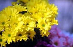 Tusensköna - blomma Arkivfoto