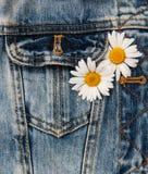 Tusensköna i jeansfack Arkivbilder