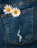 Tusensköna i jeansfack Royaltyfri Foto