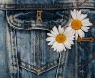 Tusensköna i jeansfack Fotografering för Bildbyråer