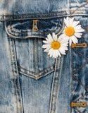 Tusensköna i jeansfack Royaltyfri Fotografi
