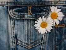 Tusensköna i jeansfack Royaltyfria Bilder