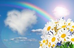 Tusensköna och regnbåge mot himlen Fotografering för Bildbyråer
