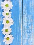 Tusensköna på träbakgrund med kopieringsutrymme royaltyfria foton