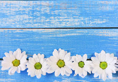 Tusensköna på träbakgrund med kopieringsutrymme fotografering för bildbyråer