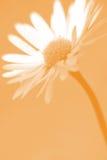 Tusenskönablomma fotografering för bildbyråer