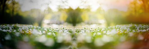 Tusenskönafältet med multipel blommar och solsignalljuset Fotografering för Bildbyråer