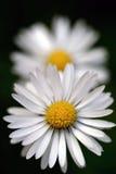 tusenskönaperspektiv Fotografering för Bildbyråer