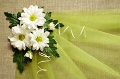 Tusenskönor och grön organza Royaltyfria Foton