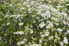 Tusenskönor i det lösa gräset Royaltyfri Bild