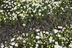 Tusenskönor i det lösa gräset Royaltyfri Fotografi