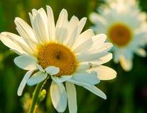 Tusenskönor i solen i sommartid arkivfoto
