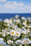 Tusenskönor mot himlen och havet Royaltyfri Fotografi