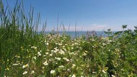 Tusenskönor och gräs på bakgrunden av havet och blå himmel