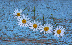 Tusenskönor på en träbakgrund Royaltyfri Foto