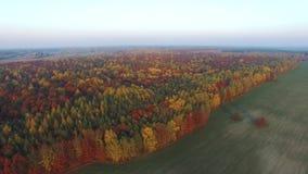 Tusentals färgrika träd, flyg- sikt stock video