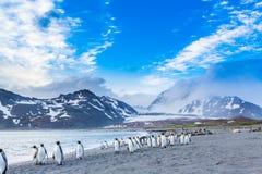 Tusentals marsch för konung Penguins för räkningen av de annalkande katabatic vindarna arkivfoton