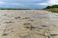 Tusentals sjöstjärnaflock till kusten Royaltyfri Fotografi