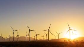Tusentals vindturbiner på solnedgången Arkivfoto