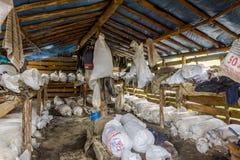Cheese in storage, Tusheti Royalty Free Stock Image