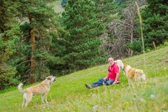 Man surrounded by dogs Royalty Free Stock Photos