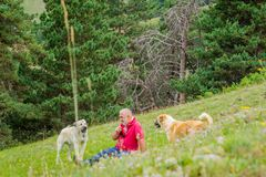 Man surrounded by dogs Royalty Free Stock Photography