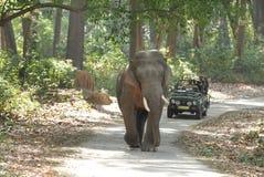 Tusker à l'intérieur de forêt de Jim Corbett Images stock