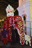 Tusker ad un perahera, Sri Lanka fotografia stock libera da diritti