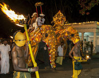 A Tusker group parades through the streets of Kandy during the Esala Perahara in Sri Lanka. royalty free stock photos