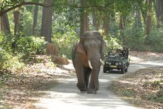 Tusker inside Jim Corbett forest Stock Images