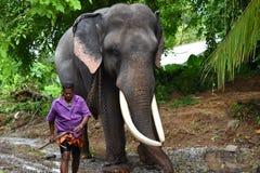 Tusker med hans mahout Fotografering för Bildbyråer