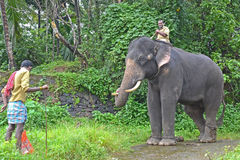 Tusker prigioniero dell'elefante Fotografia Stock Libera da Diritti